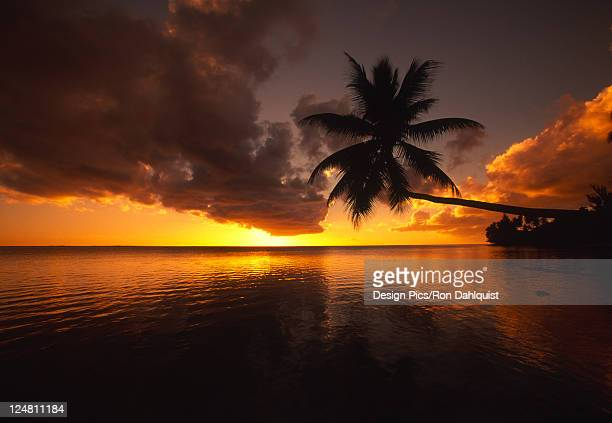 Palm tree with trunk bent far out over the ocean, silhouetted by a yellow sunset sky.