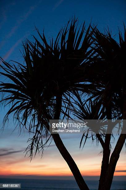 Palm trees against setting sun