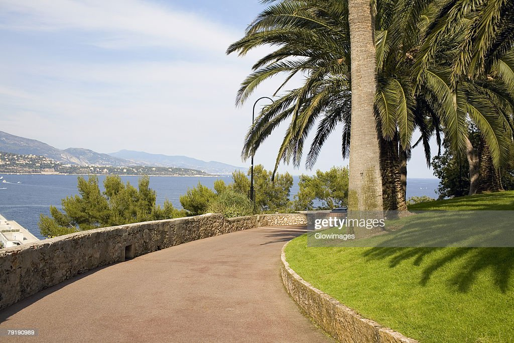 Palm trees along a walkway, Monte Carlo, Monaco : Foto de stock