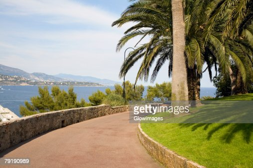 Palm trees along a walkway, Monte Carlo, Monaco : Stock Photo