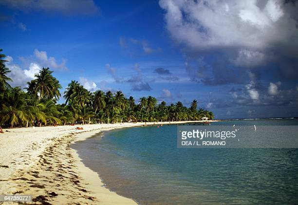 Palm trees along Caravelle beach at SainteAnne GrandeTerre island Guadeloupe Overseas department of the French Republic