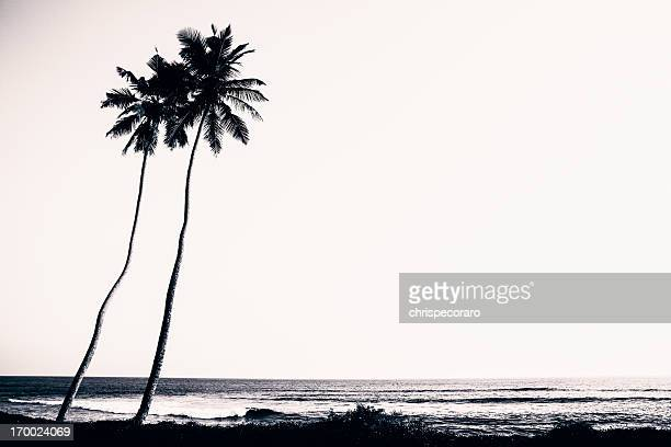 Palm Trees and Beach Silhouette