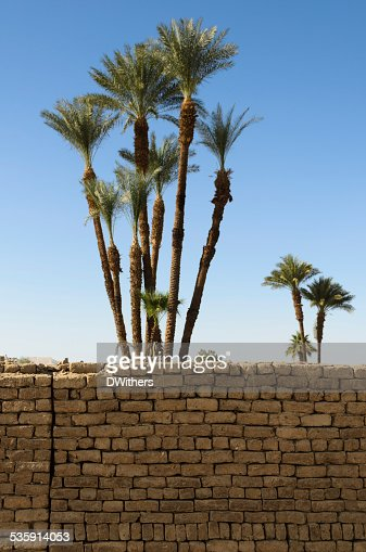 Palm Trees and Brick Wall : Stock Photo
