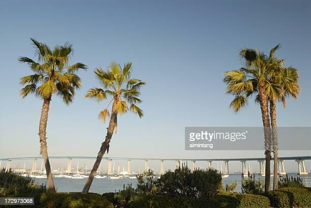 Palm Trees and Bridge