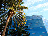 palm trees and modern glass building