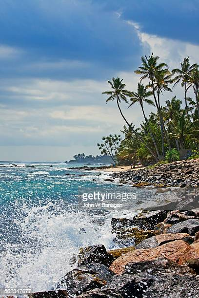 Palm trees and coast, Unawatuna, Indian Oce