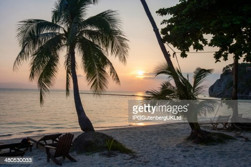 Palm trees and deck chairs on beach at sunset : Stock Photo