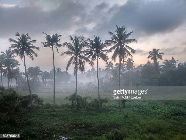 Palm Trees And Grass On Field Against Cloudy Sky At Sunset