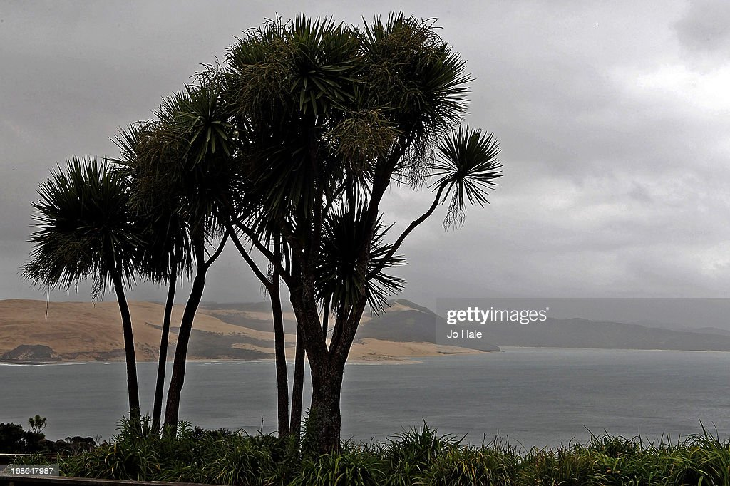 Palm Trees and Hokianga Sand Dunes and Harbour at Omapere from Pakia Hill in the Northlands of the North Island in New Zealand.