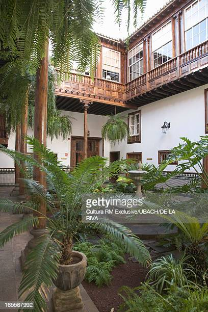 Palm trees and plants in courtyard