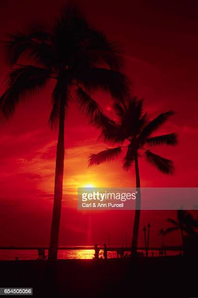 Palm Trees and Red Sunset