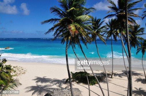 Palma árvores e as sombras na praia : Foto de stock