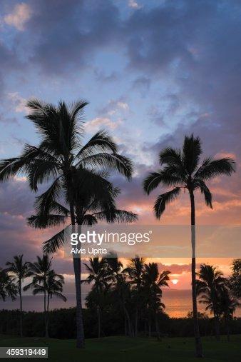 Palm trees and sunset on Maui