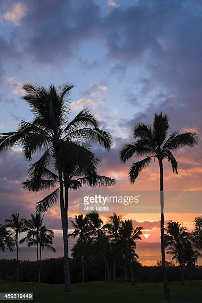 Palm trees and sunset on Maui