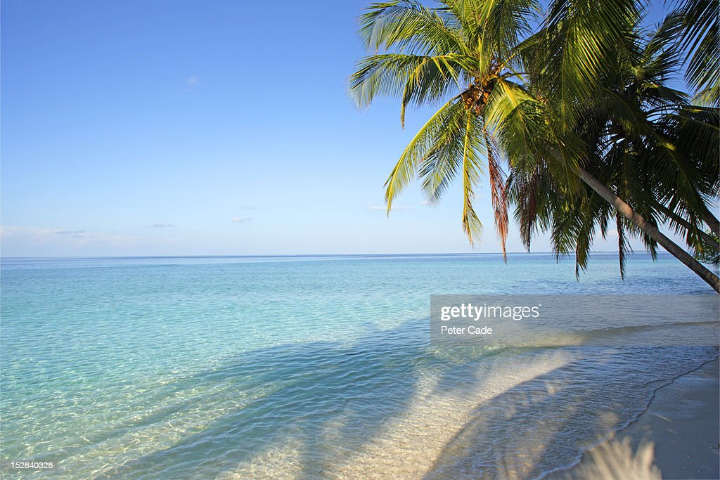 Palm trees and tropical ocean : Stock Photo