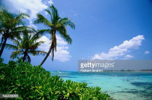 Palm trees (Palmaceae) and tropical sea