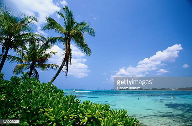 Palm trees (Palmaceae) and tropical sea