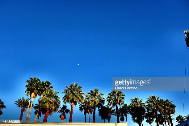 Palm trees are seen during day 1 of the 2014 Coachella Valley Music Arts Festival at the Empire Polo Club on April 11 2014 in Indio California