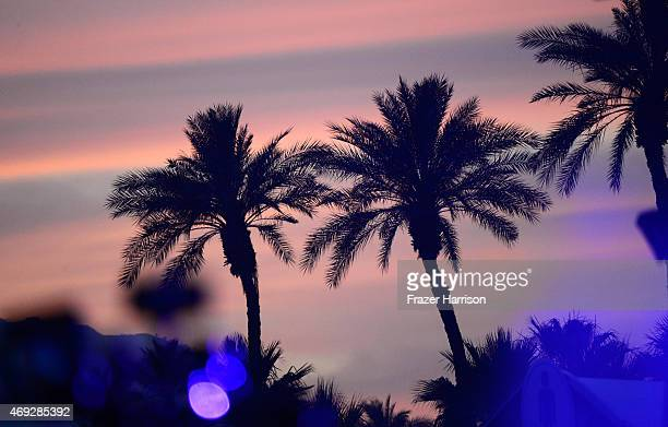 Palm trees are silhouetted against the sunset during day 1 of the 2015 Coachella Valley Music Arts Festival at the Empire Polo Club on April 10 2015...