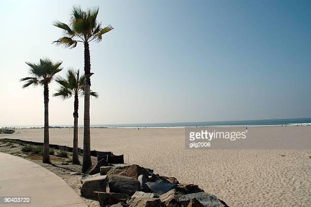 Palm trees at an empty California beach