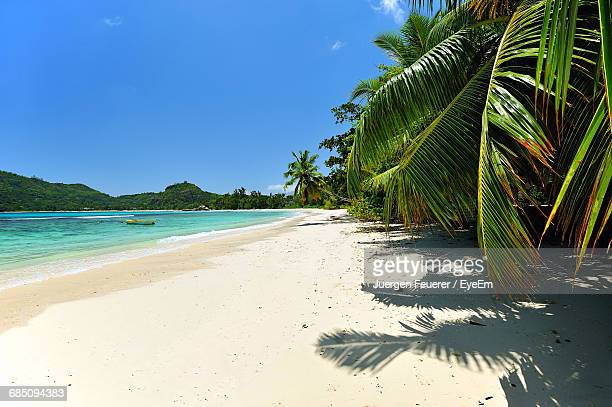 Palm Trees At Beach During Sunny Day