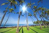 Palm trees at Kailua Kona, Hawaii
