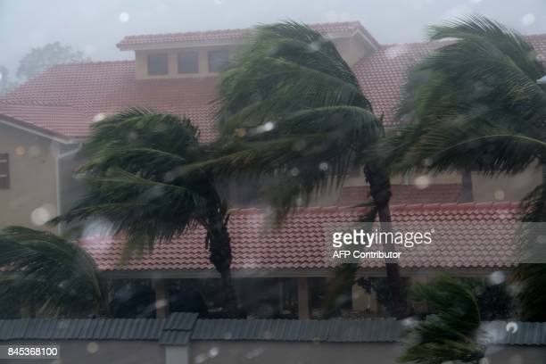 Palm trees blow in the winds of hurricane Irma in Bonita Springs Florida northeast of Naples on September 10 2017 Hurricane Irma regained strength to...