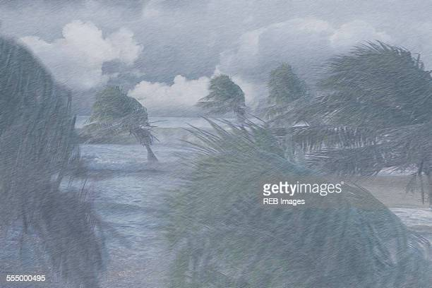 Palm trees blowing in extreme weather conditions