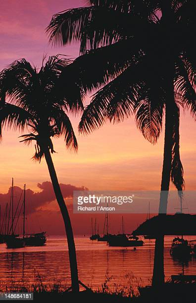Palm trees & boats on the Lagoon silhouetted at sunset.