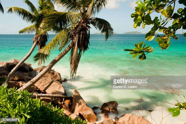 Palm trees cast shadow over turquoise sea water in exotic beach