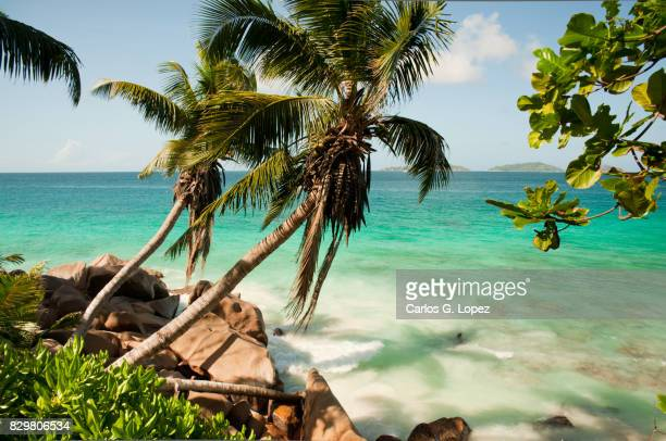 Palm trees casting shadow over turquoise sea water in exotic beach