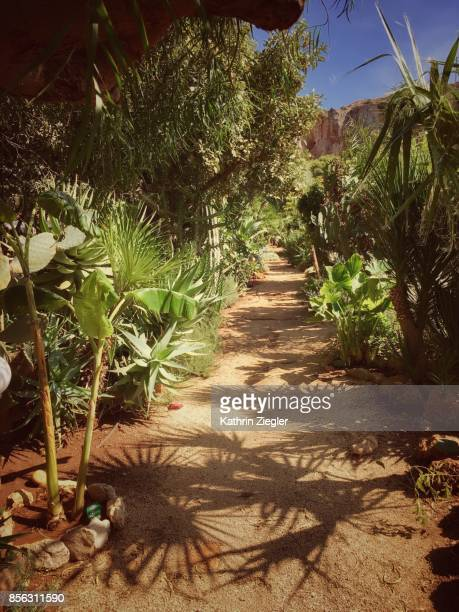 Palm trees casting shadows on walkway, Sicily