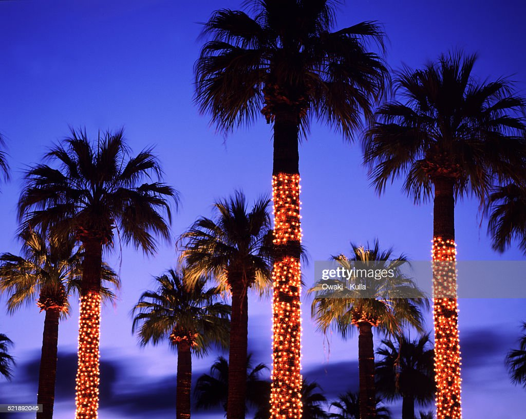 Palm Trees With Christmas Lights Pictures Part - 15: Palm Trees Decorated With Christmas Lights - Palm Springs, CA : Stock Photo