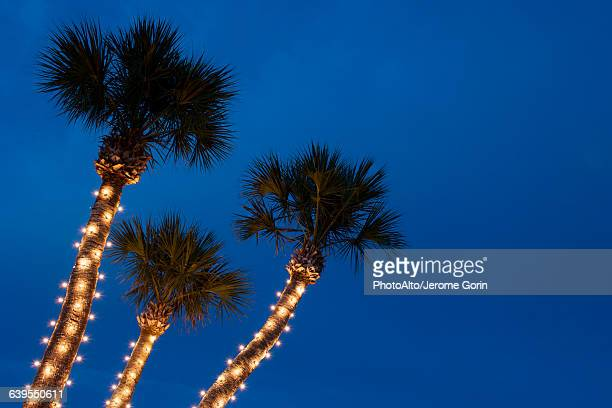 palm trees decorated with christmas lights - Palm Tree With Christmas Lights