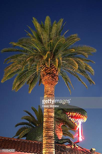 Palm trees grow near the dinosaur on Ripleys Believe or Not Odditorium at Hollywood and Highland as many of the areas palms fade into history because...