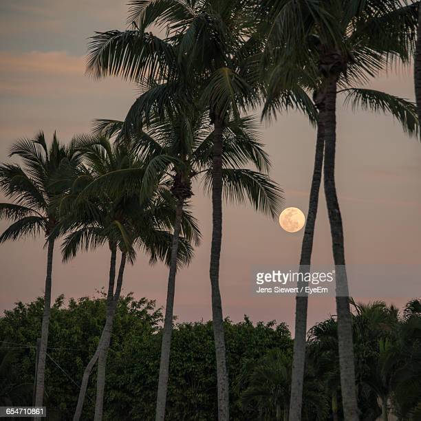 Palm Trees Growing Against Sky At Dusk