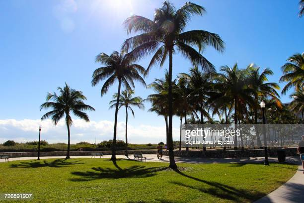 Palm Trees Growing At Park Against Blue Sky On Sunny Day