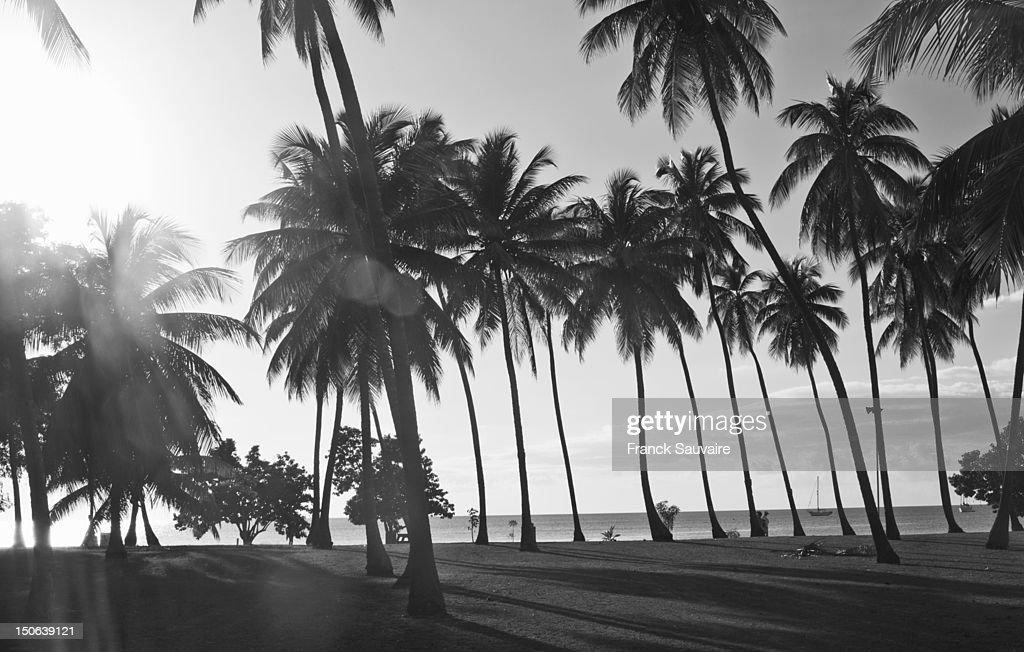 Palm trees growing on beach : Stock Photo