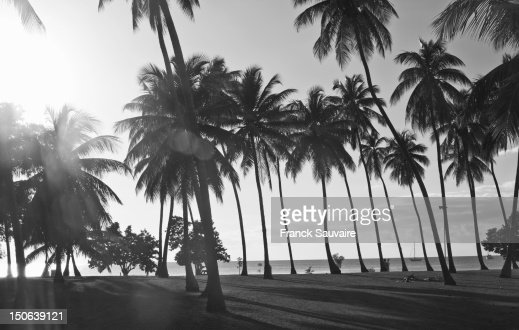 Palm trees growing on beach : Stock Photo