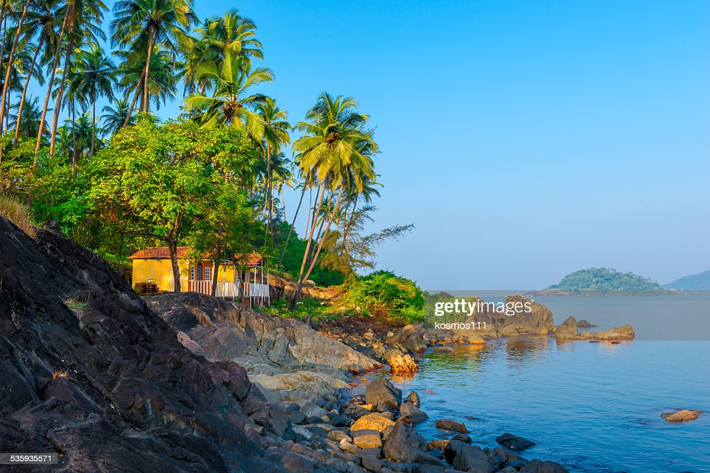palm trees growing on the rocky shore in heavenly place : Stock Photo
