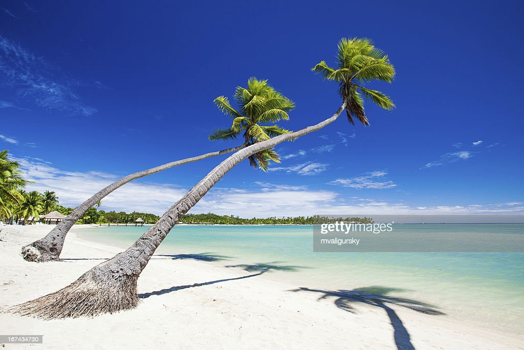 Palm trees hanging over stunning tropical lagoon : Stock Photo