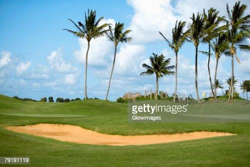Palm trees in a golf course, Kauai, Hawaii Islands, USA : Stock Photo