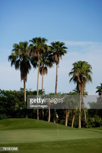 Palm trees in a golf course : Stock Photo