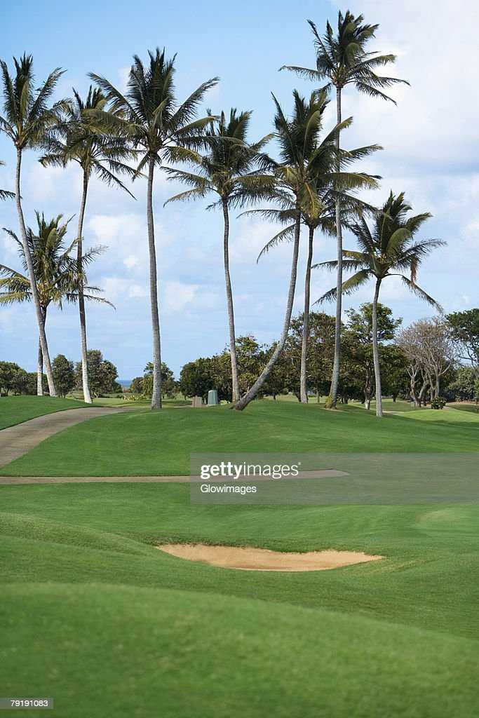 Palm trees in a golf course : Foto de stock
