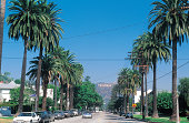 Palm trees in Los Angeles