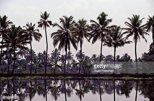 Palm trees in the Backwaters of Ayamenam Kerala The nearby village of Aymenam is where Arundhati Roy set her Book Prize winning novel 'The God of...