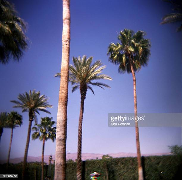 Palm trees line the festival grounds at the Coachella Valley Music and Arts Festival at the Empire Polo Fields on April 19 2009 in Indio California...
