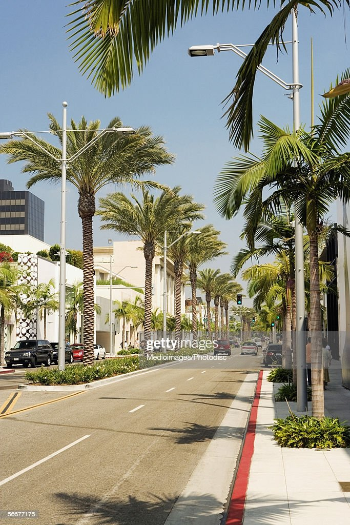 Palm trees lining a street, Rodeo Drive, Los Angeles, California, USA