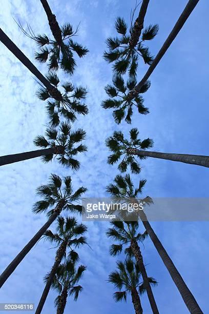 Palm Trees, Los Angeles, California
