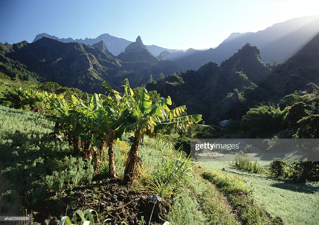 Palm trees, mountains in background